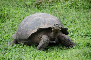 Überraschung: Eine Schildkröte im Garten